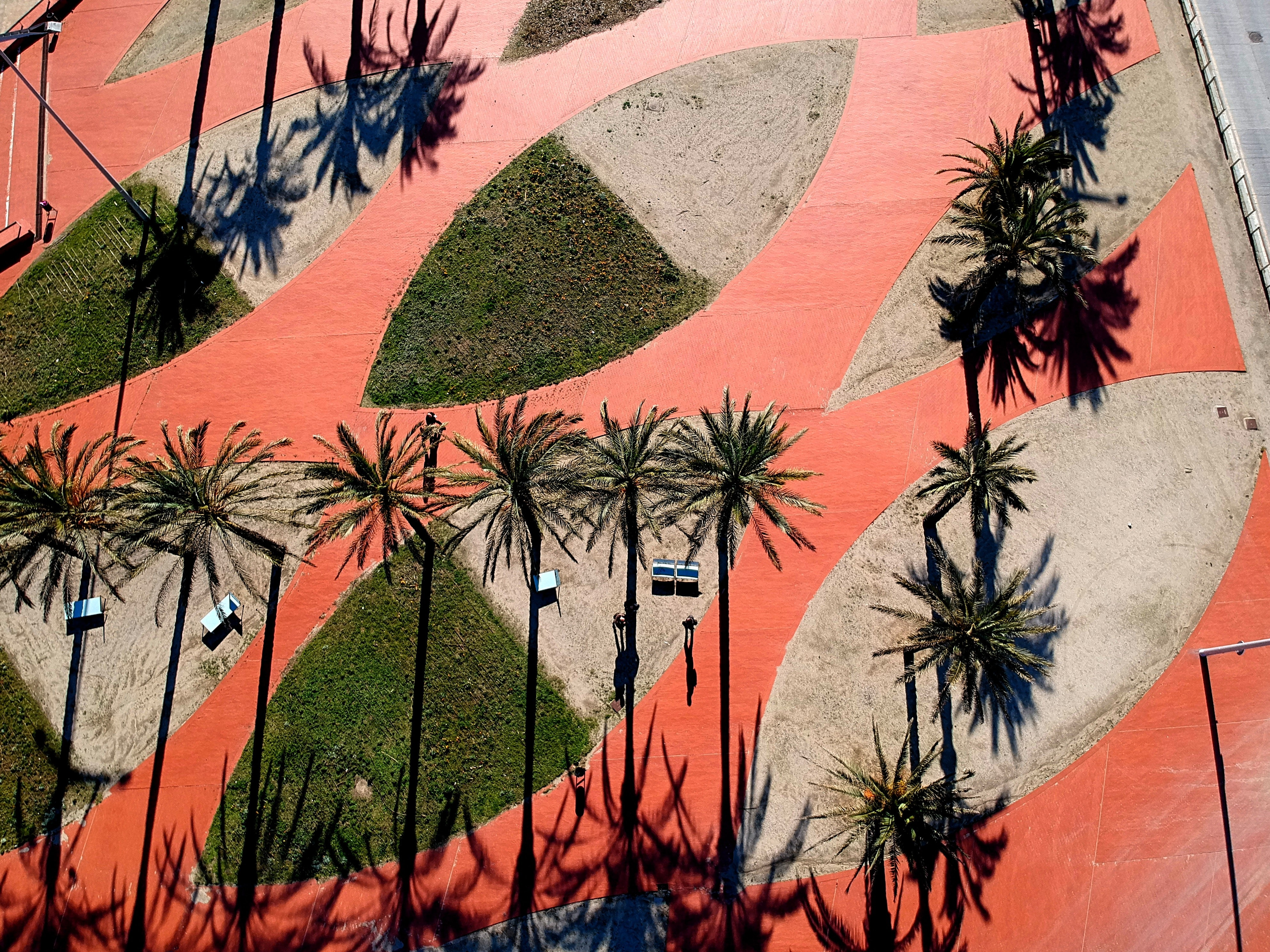 birds eye view of tropical trees