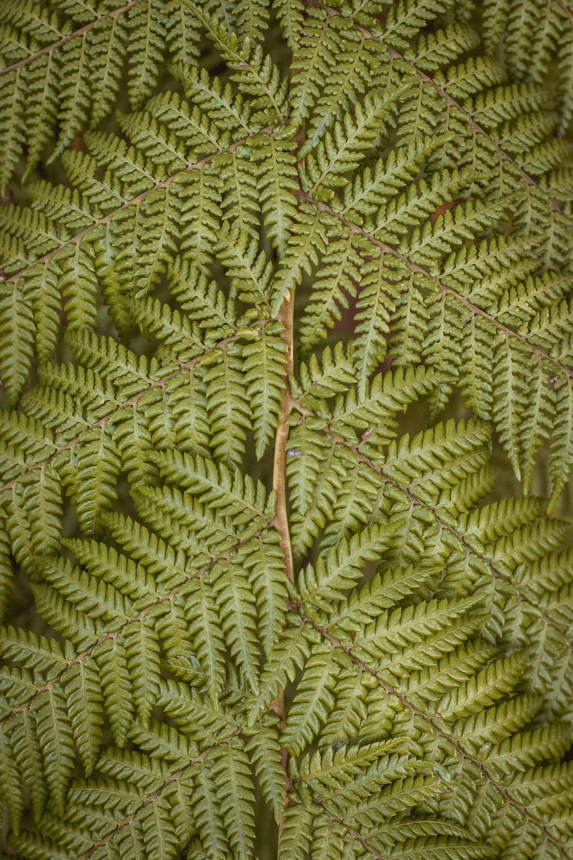 photo of green ferns