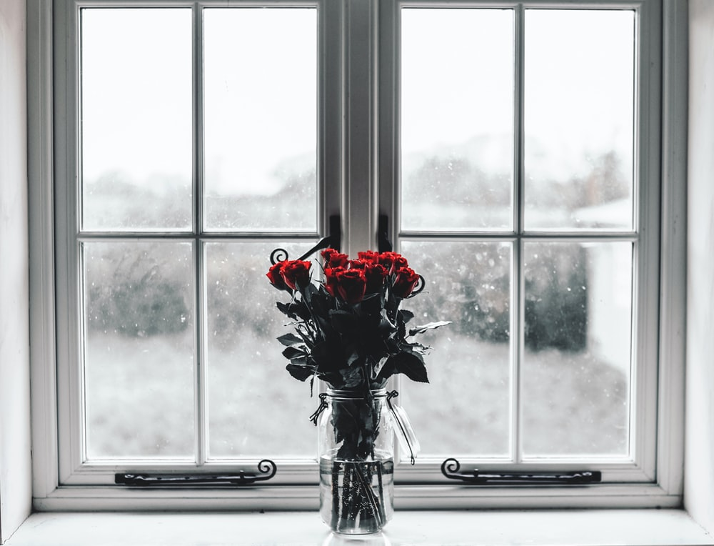 selective colors photography of red roses inside clear glass jar filled with water