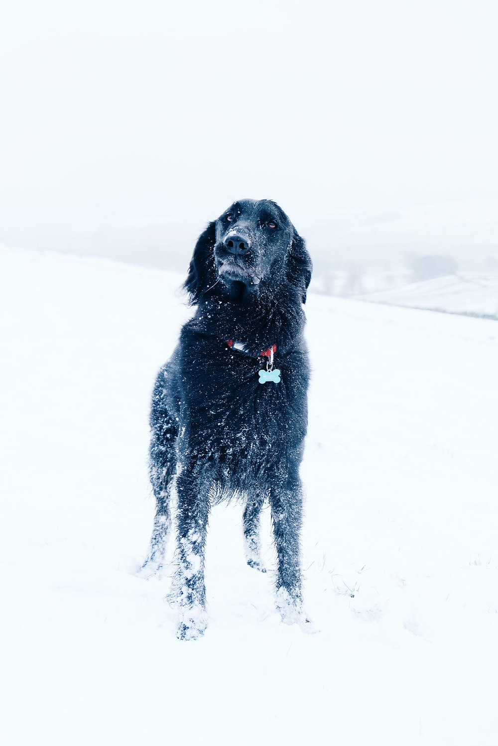 long-coated black dog standing on snow field