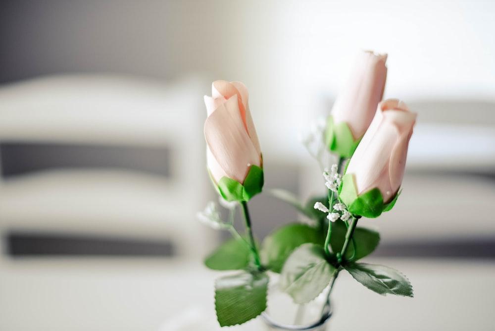 shallow focus of pink rosebuds