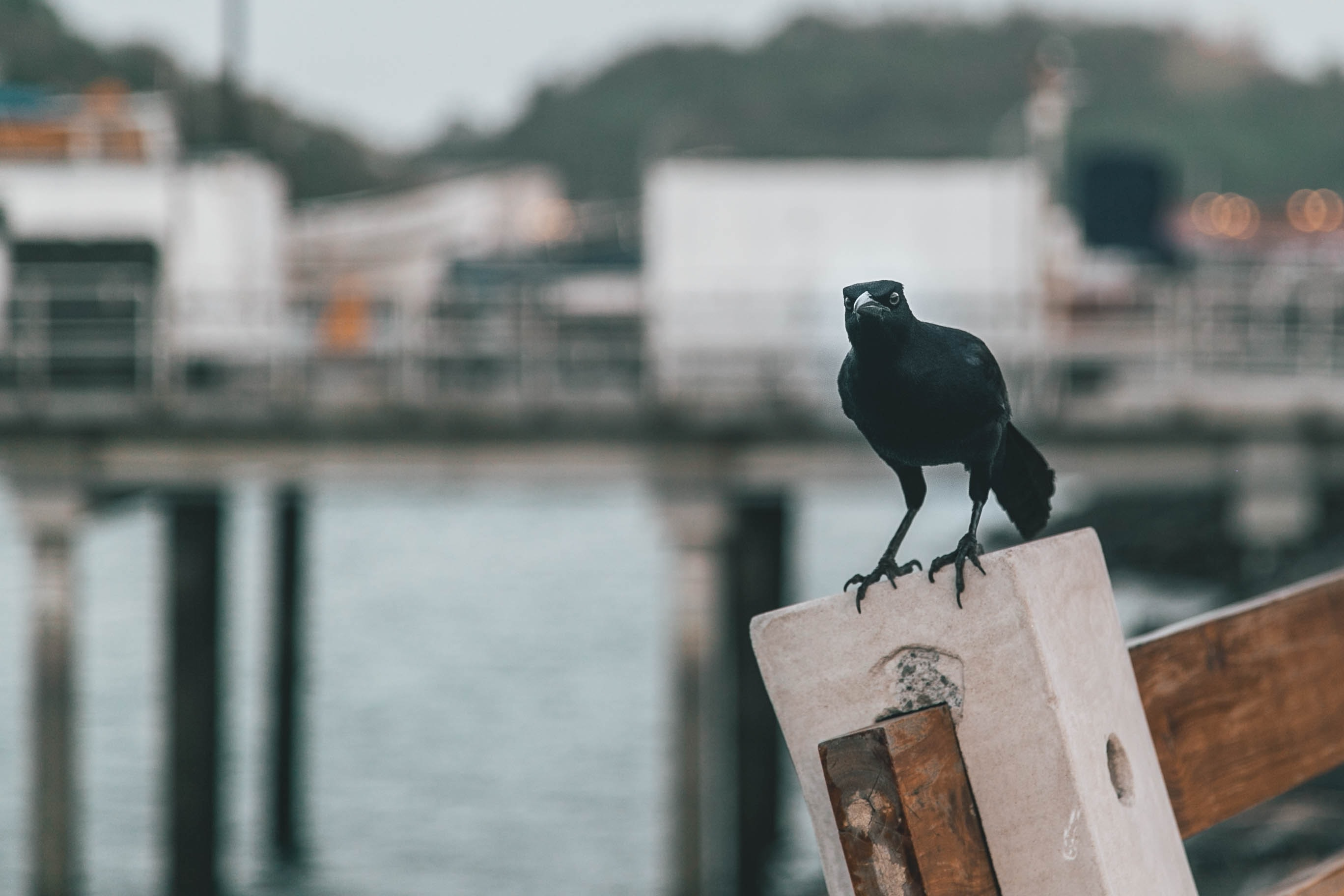 black bird on gray wooden post