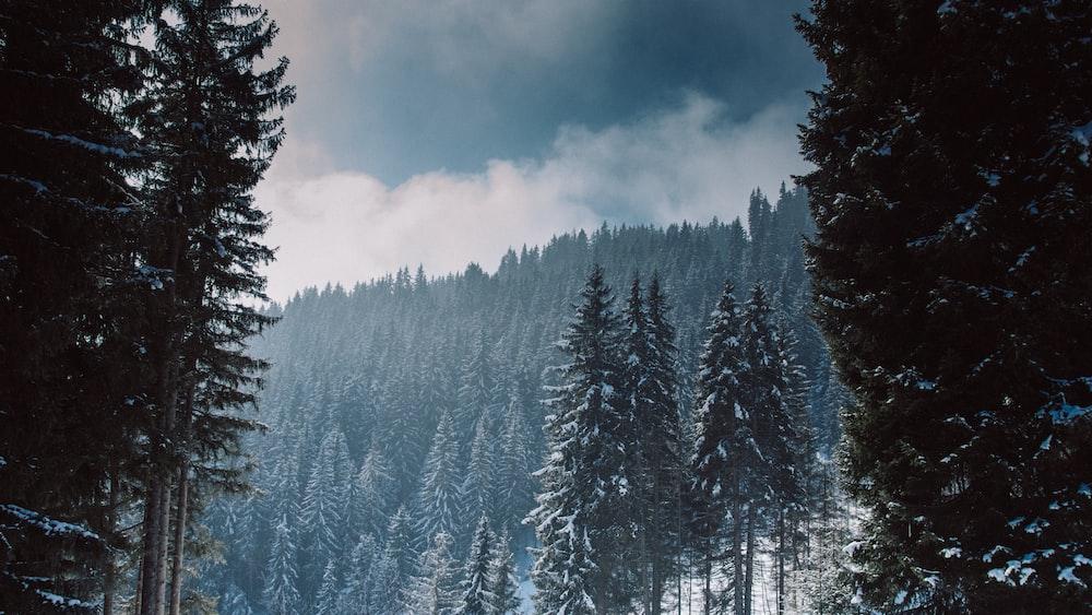 scenery of trees