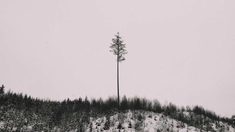 bare tree on top of mountain