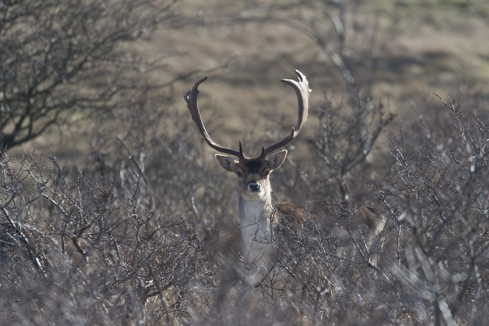 tan buck in the middle of plant field