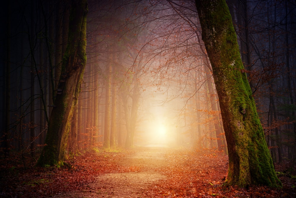 narrow pathway in a glowing forest