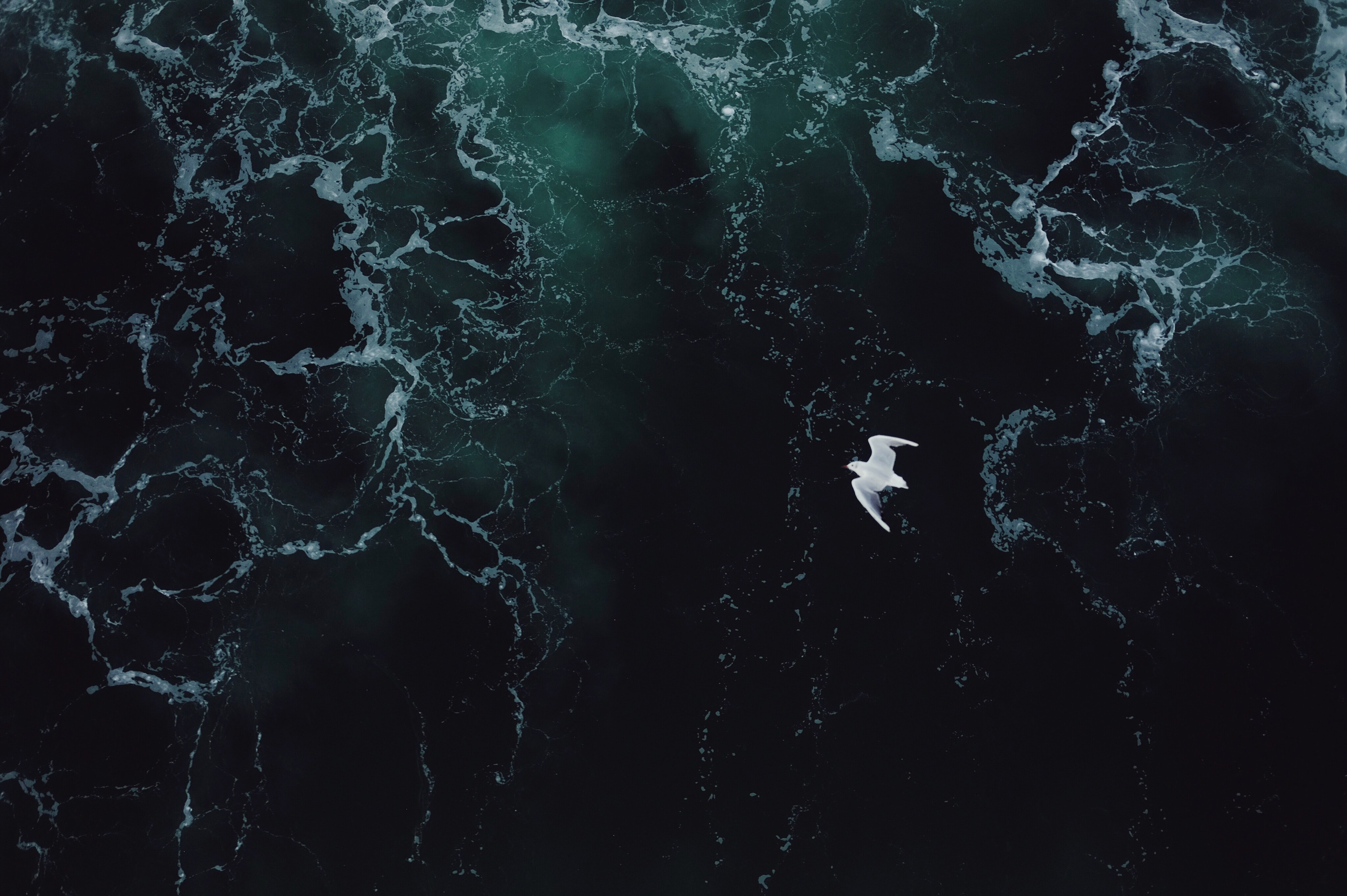 white bird flying under body of water
