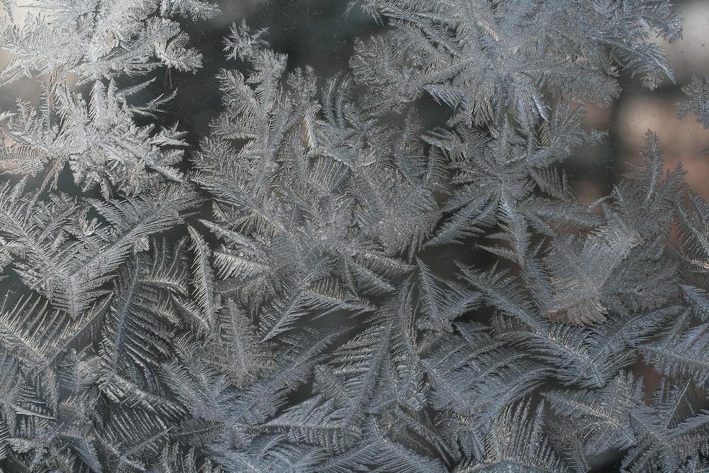 closeup photo of gray fern plant