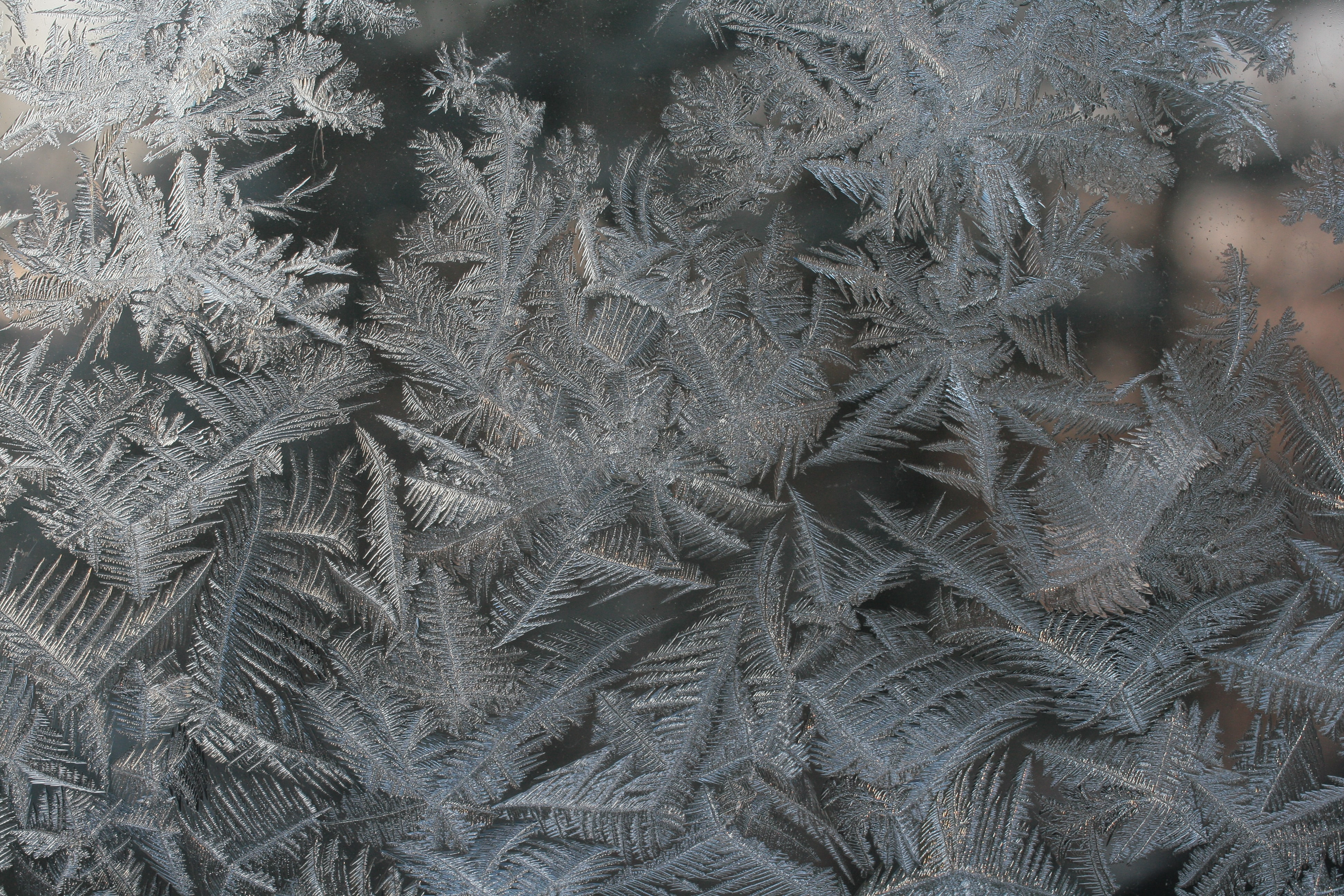 closeup photo of gray fern plant