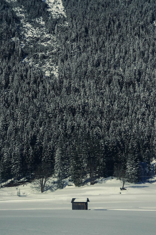 brown shack near green pine mountain