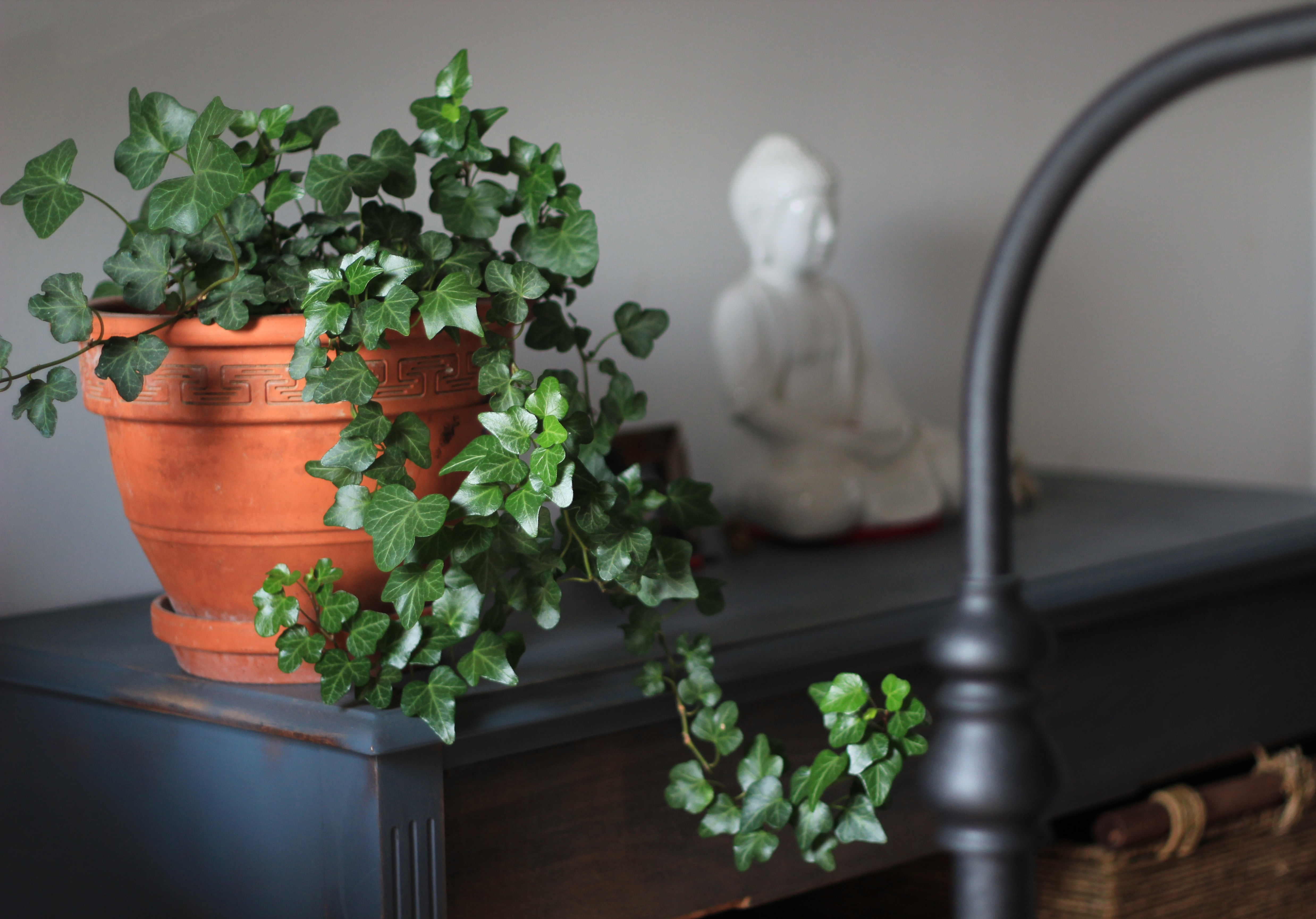 green leafed plant on brown clay pot near wall