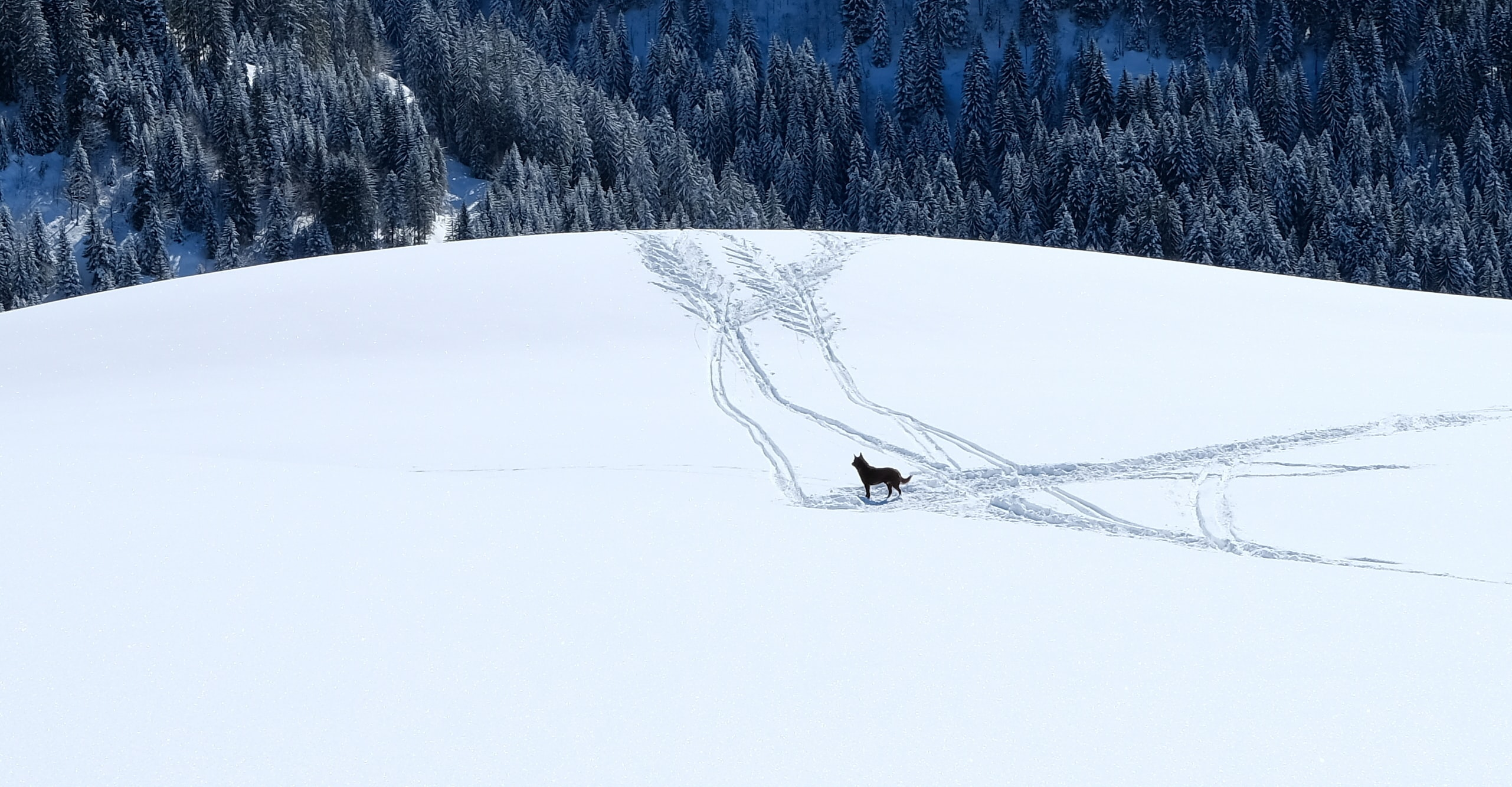 brown dog standing on snowfield