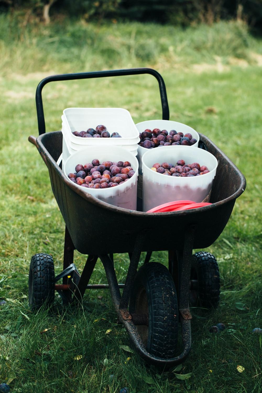 bunch of fruits in buckets on black wheelbarrow