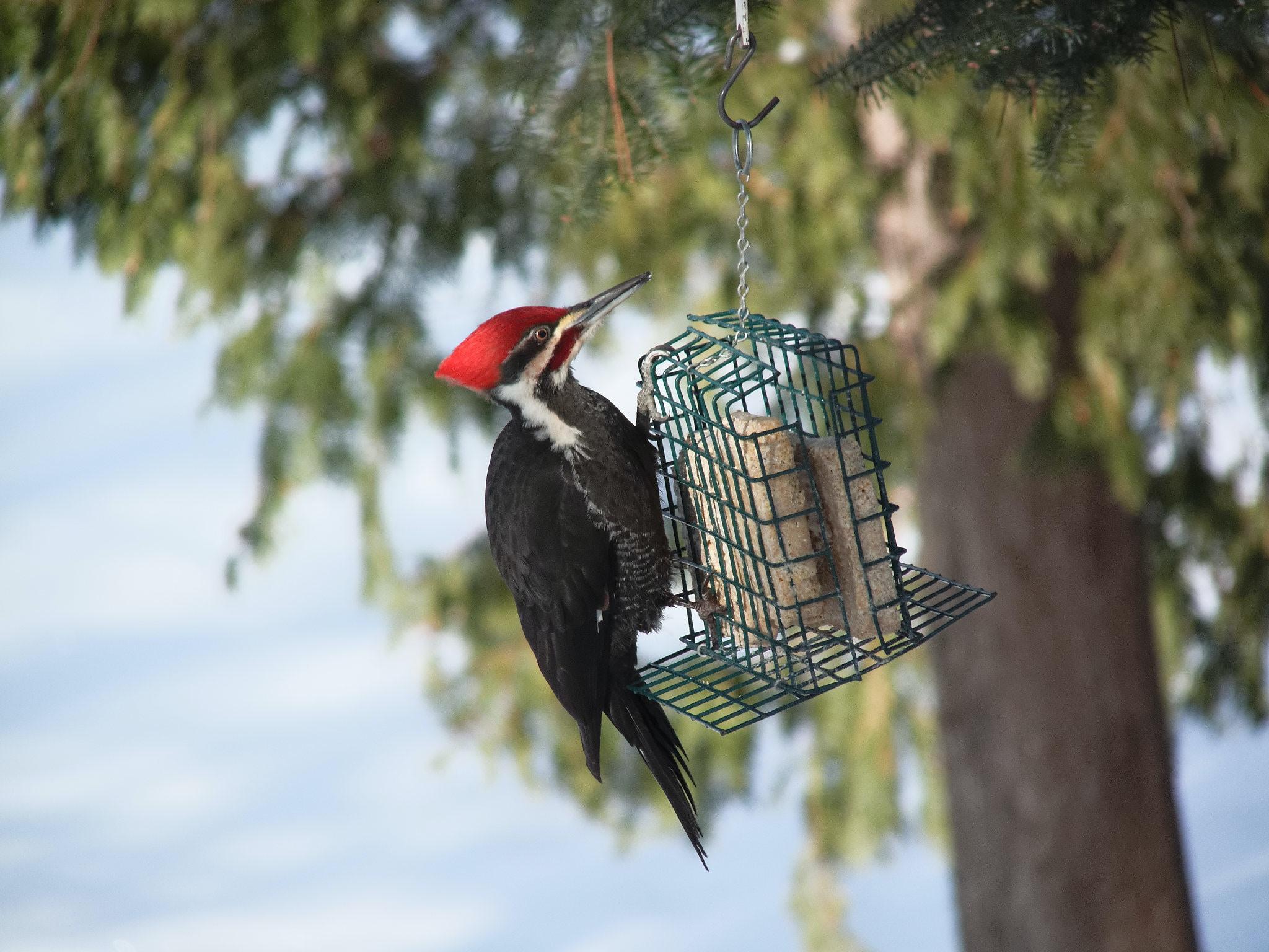 long-beak black bird hanging on metal decor