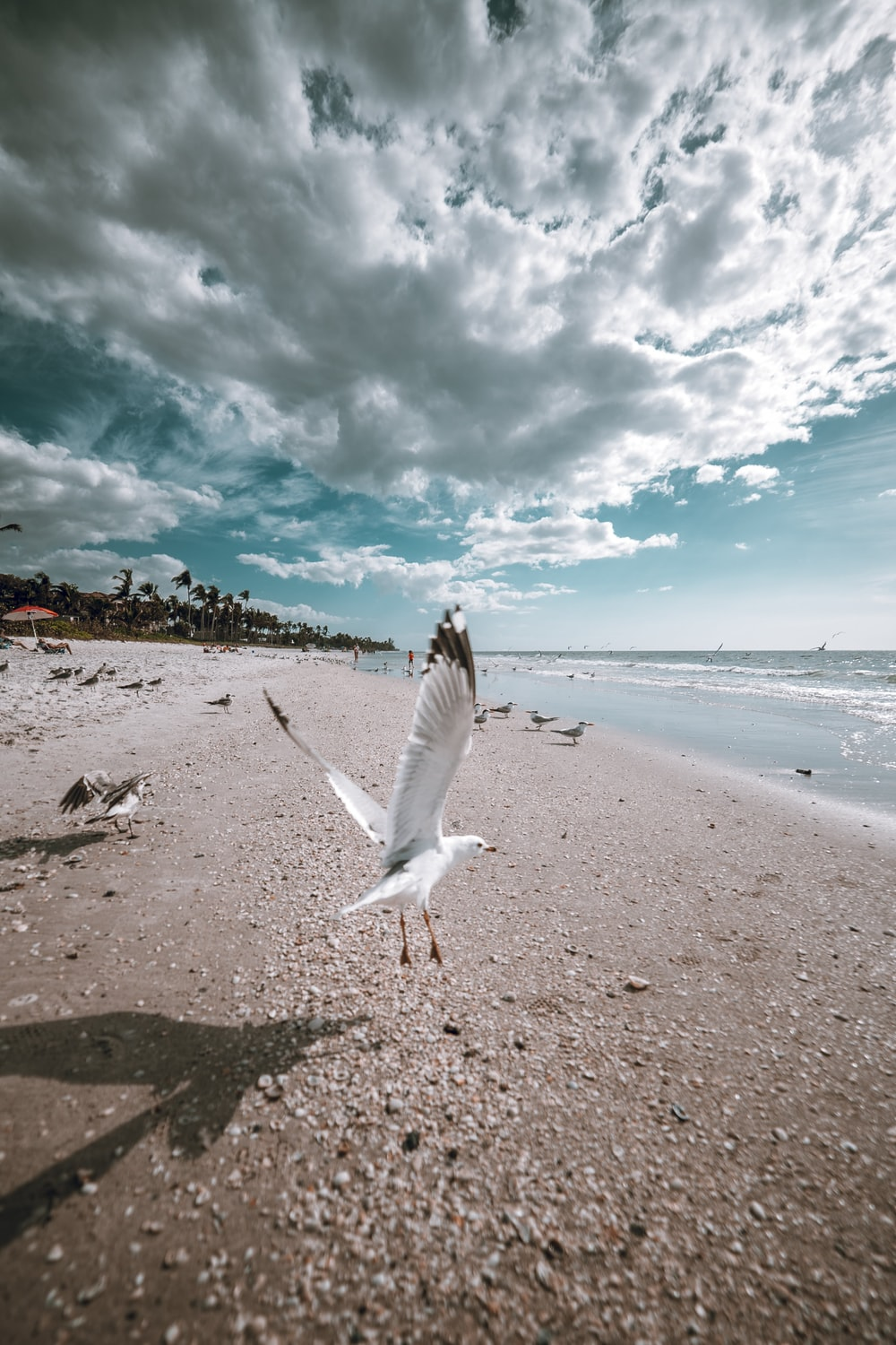 flying white bird by the beach under white and blue sky during daytime