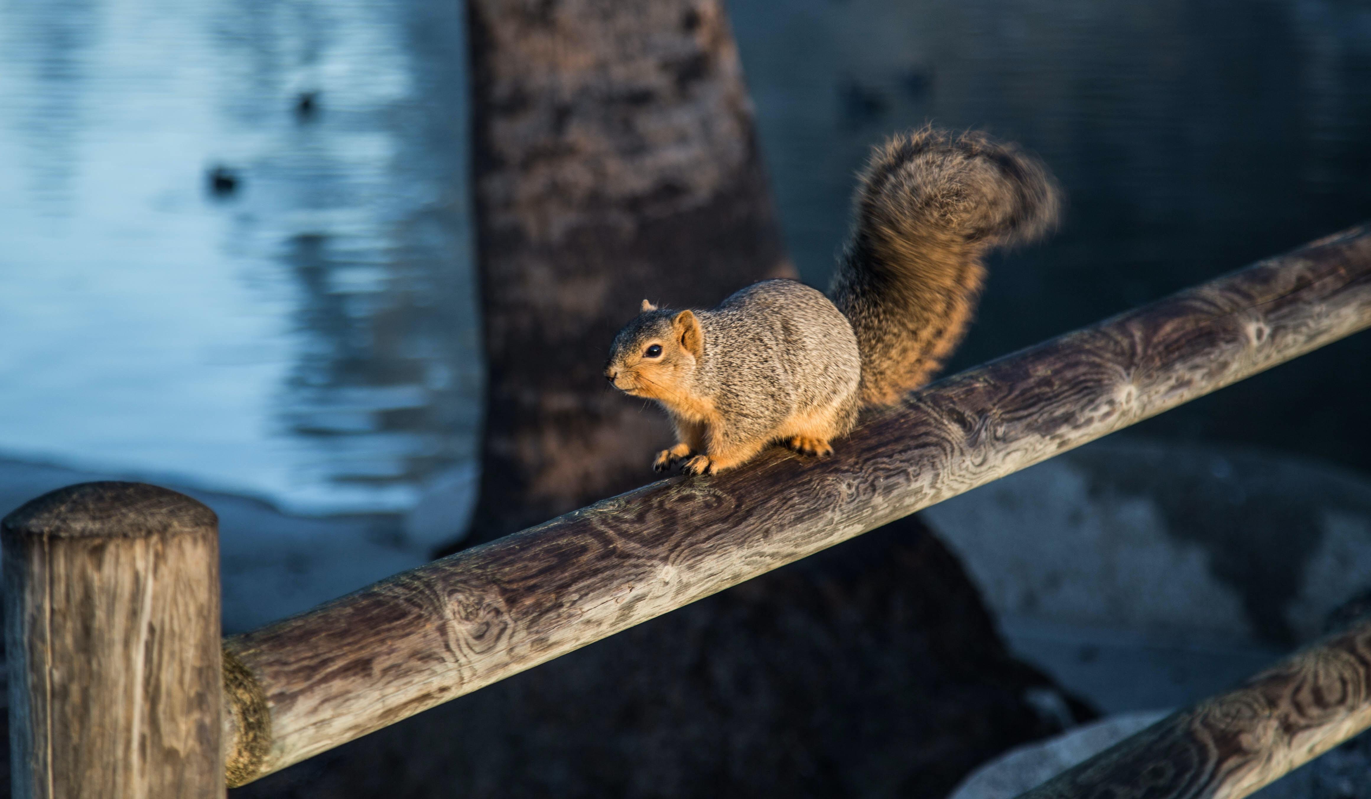 brown squirrel on wooden frame