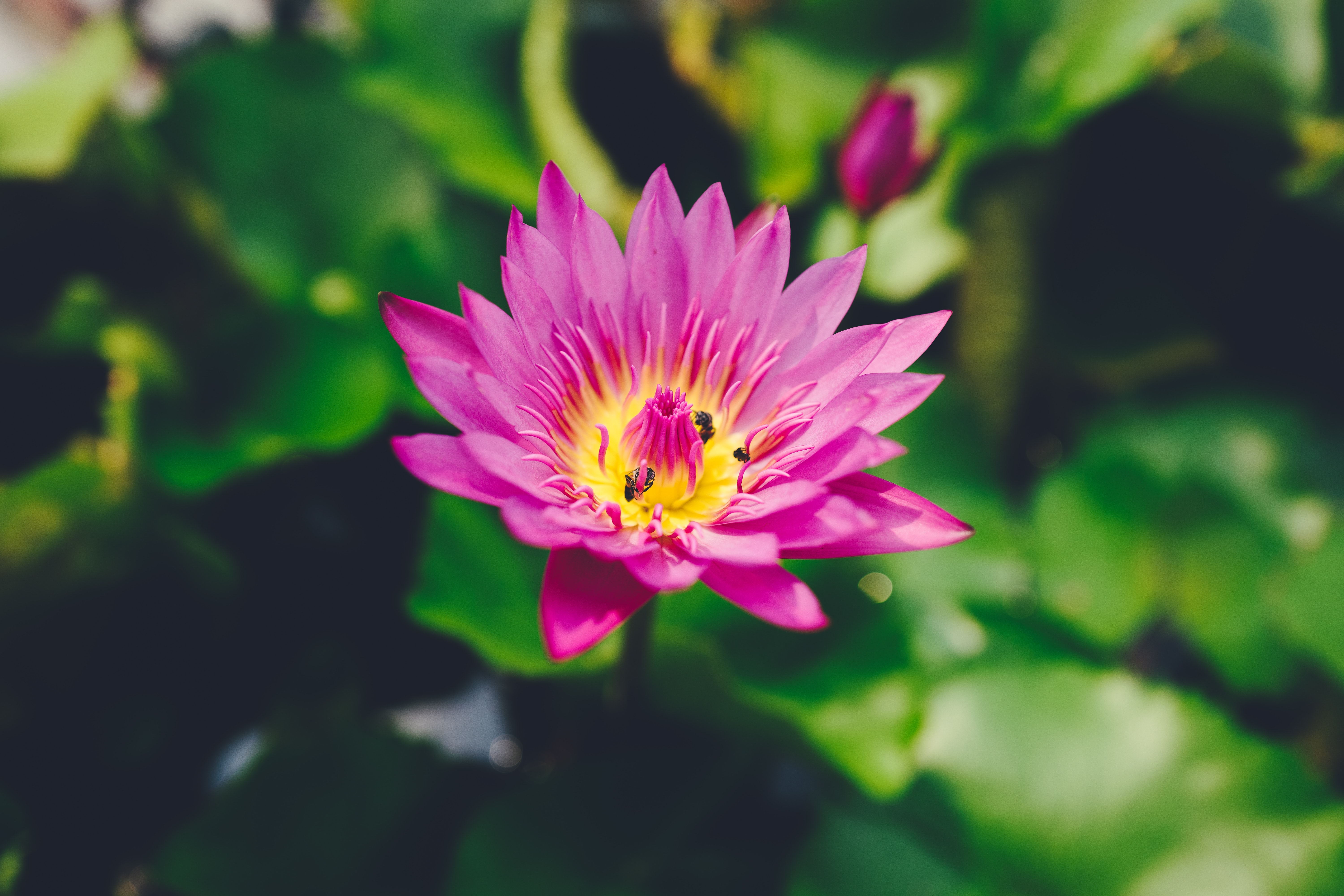 focus photography of pink petaled flower