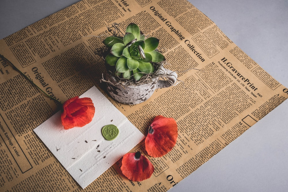 green succulent plant on newspaper