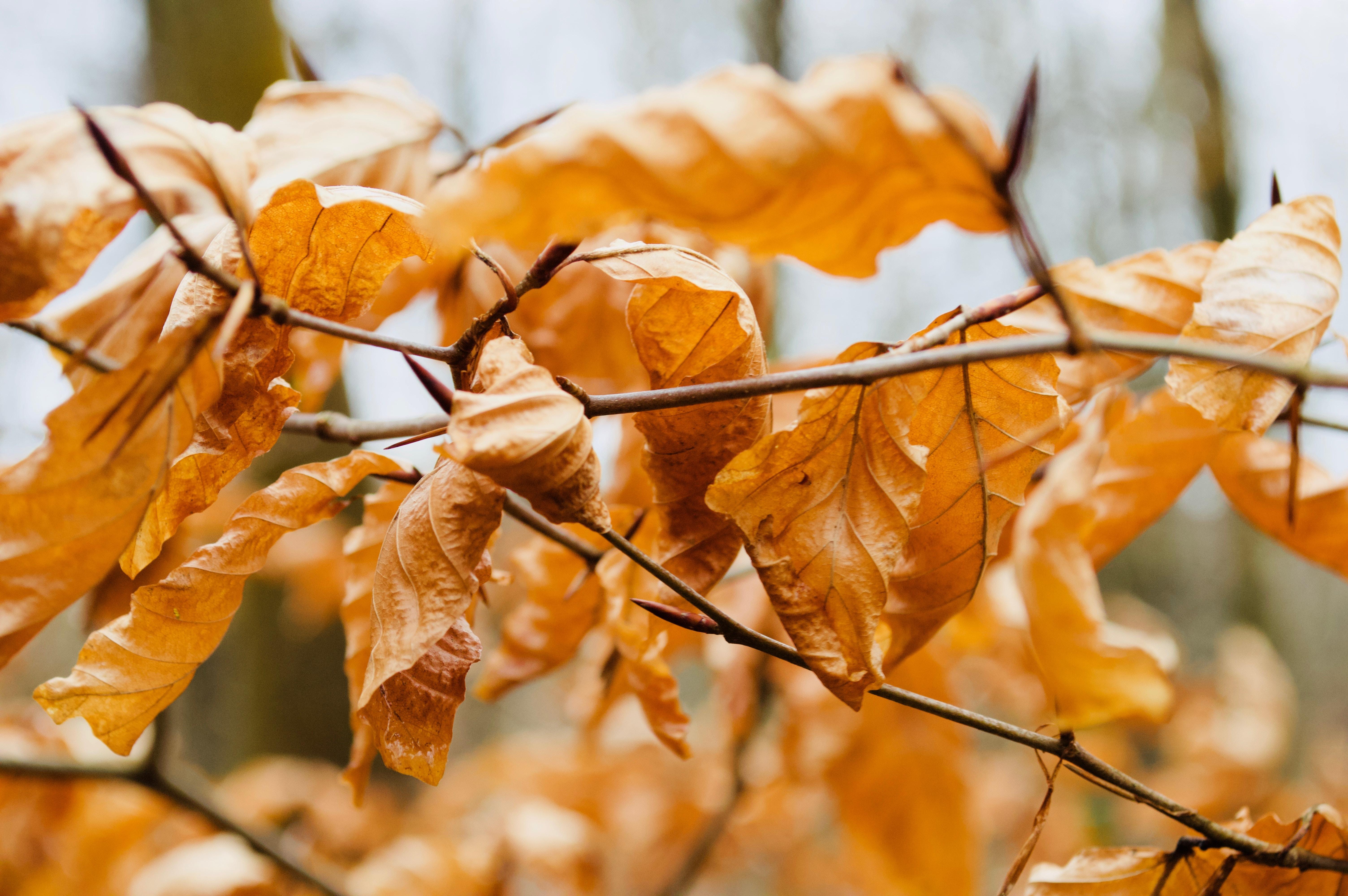 orange dried leaves