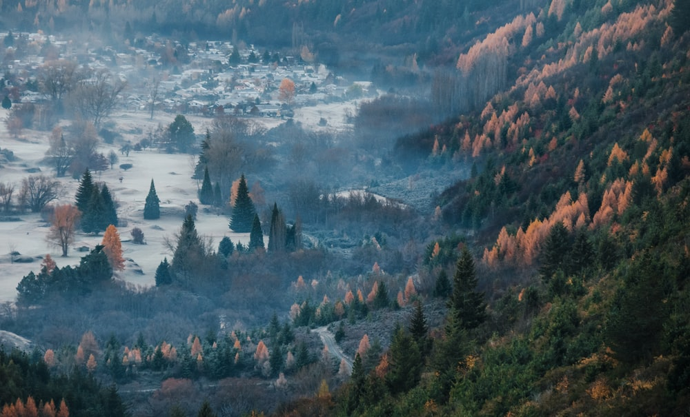green pine trees field on mountain