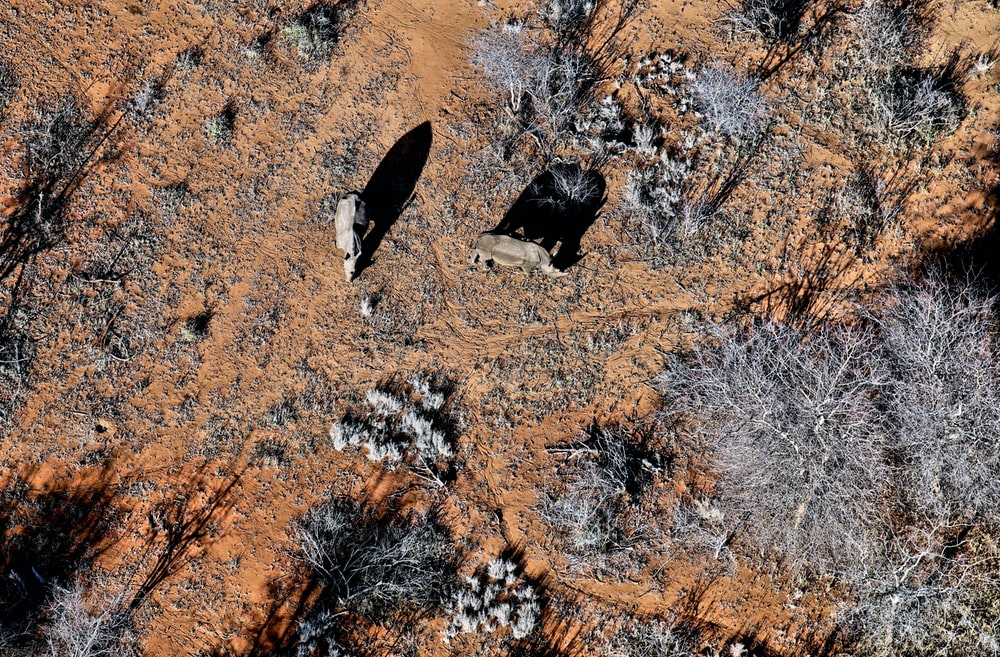 aerial photography of animals near tree at daytime