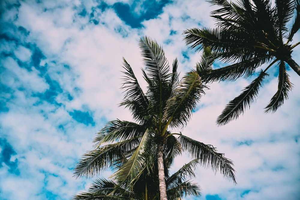 low angle photography of two palm trees under cloudy sky during daytime