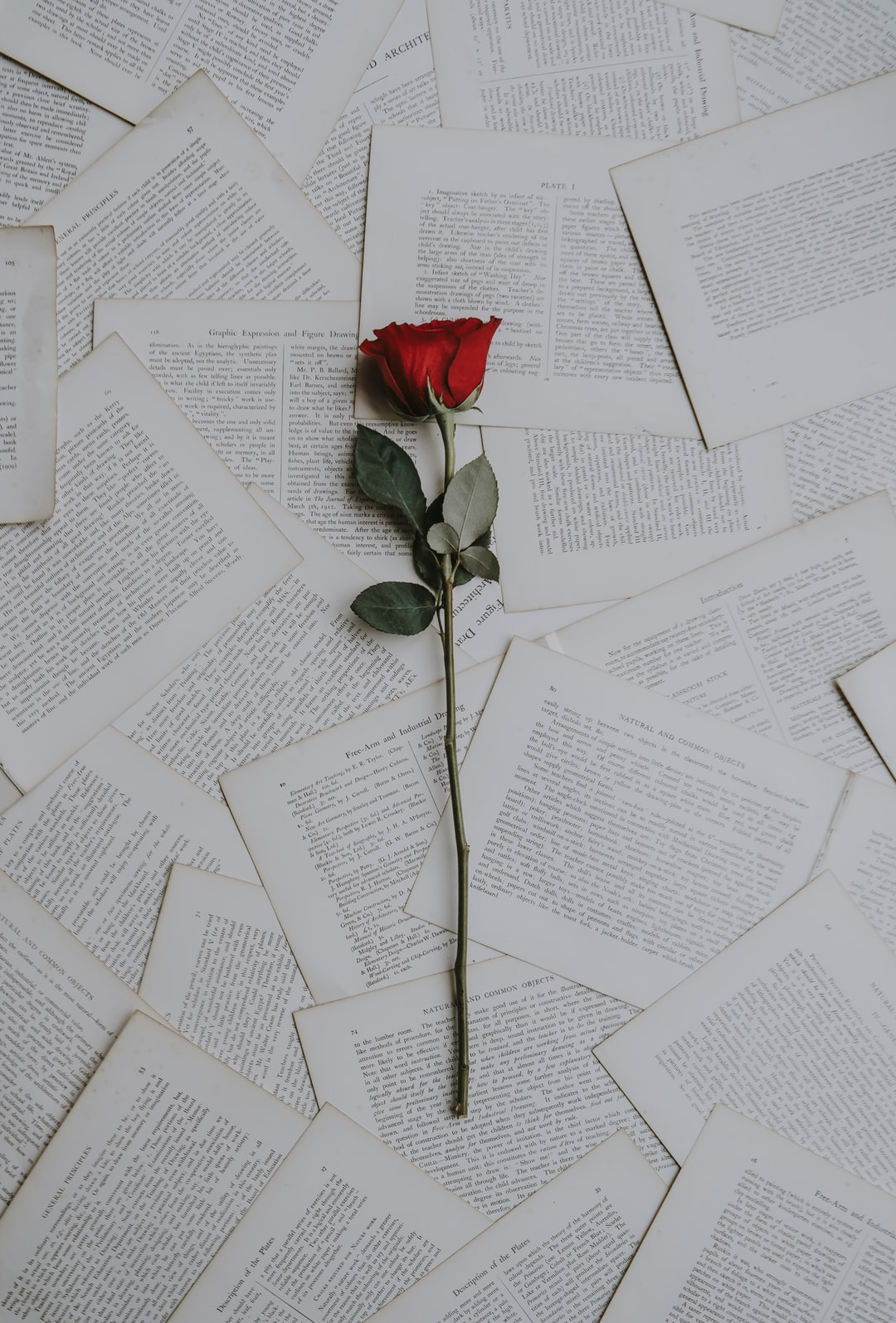 Single red rose on pages