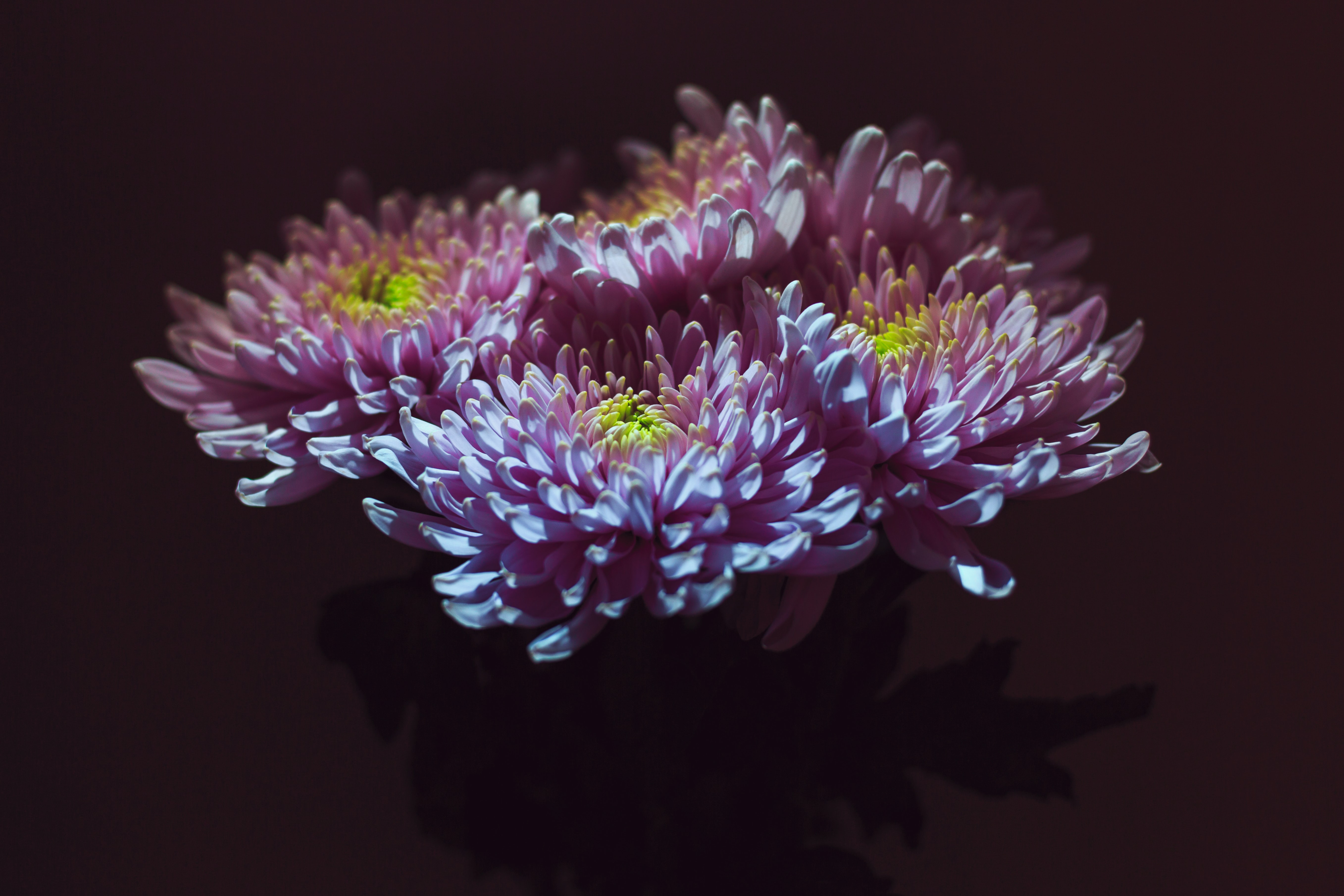 focus photo of purple and yellow petaled flower
