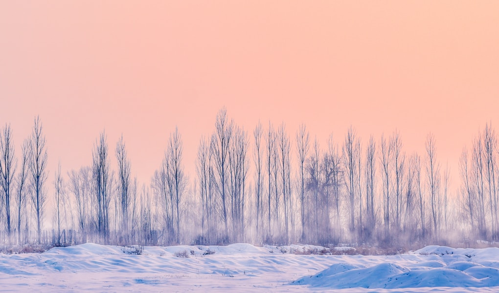 snowfield with dried trees