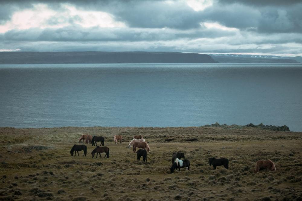 herd of horses on ground