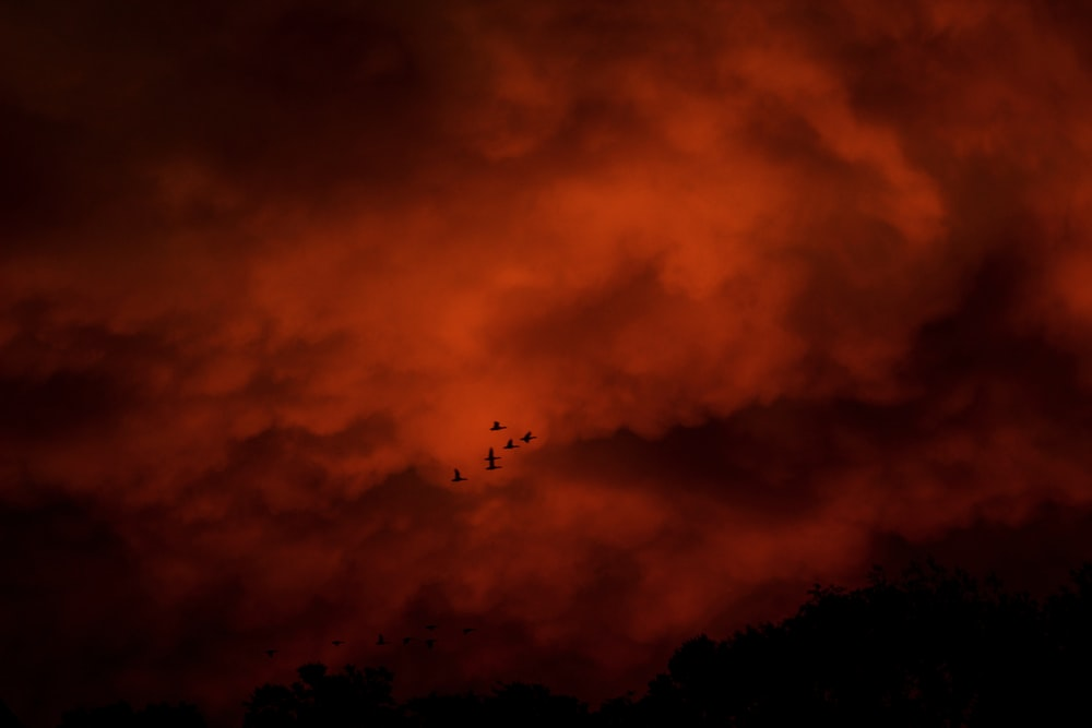 silhouette of birds flying under cloudy sky