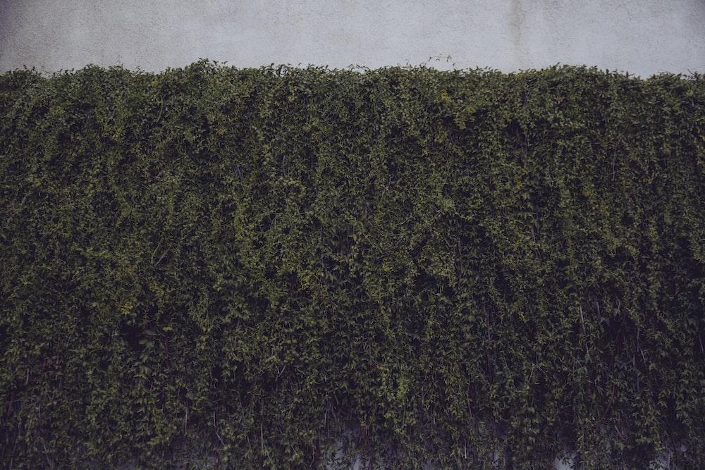 green plants on wall