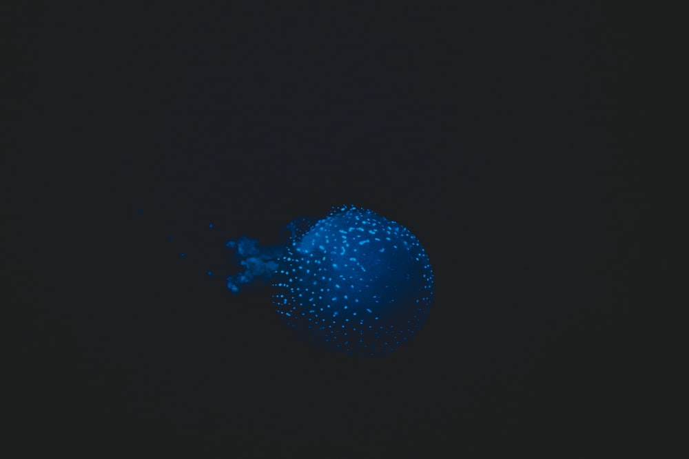 blue jellyfish on black background