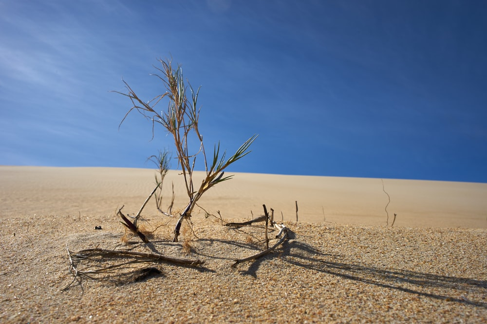 dried tree in the middle of desert