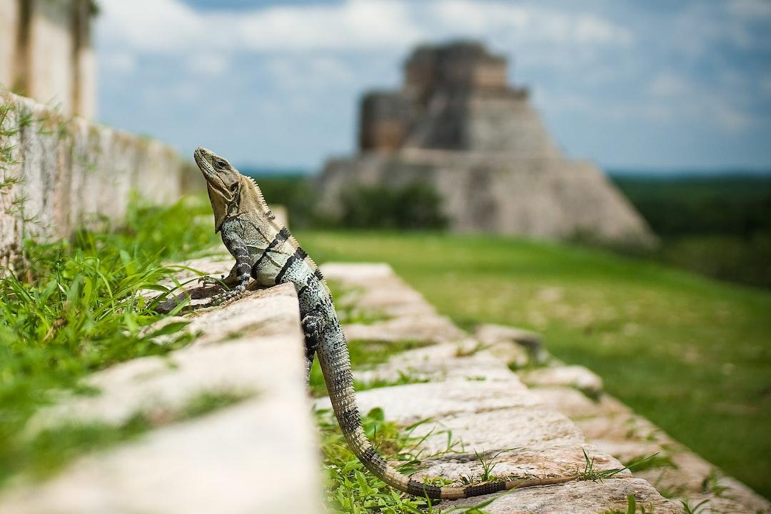 La pequeña profecía Maya