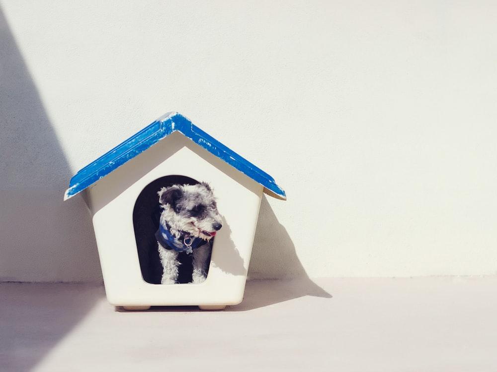 dog inside dog house