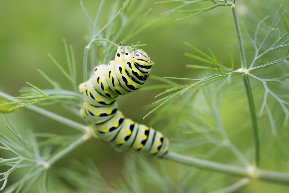caterpillar on branch