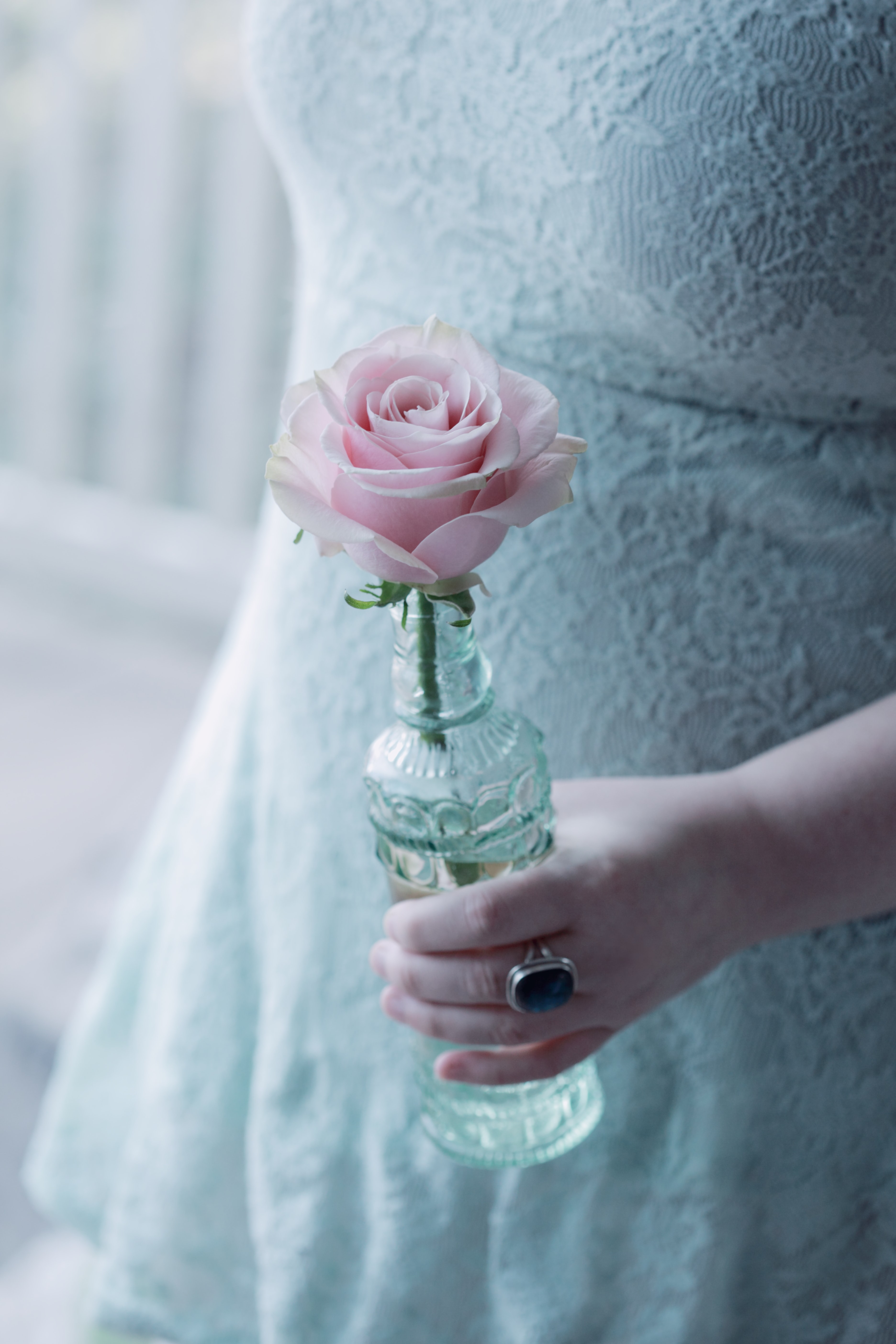person holding pink flower in glass bottle