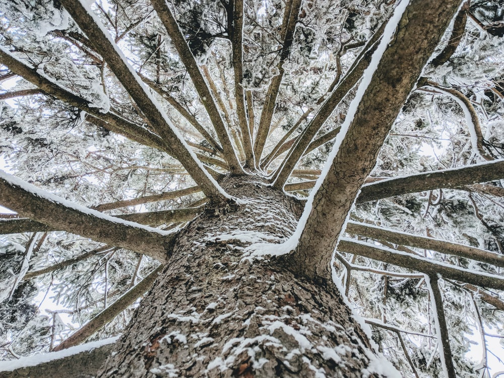 high-angle photography of brown tree trunk