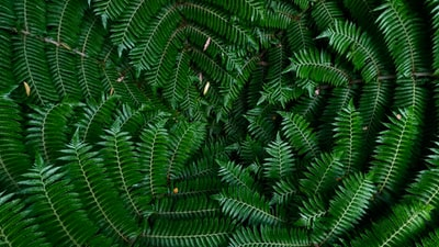 green leafed plants new zealand zoom background