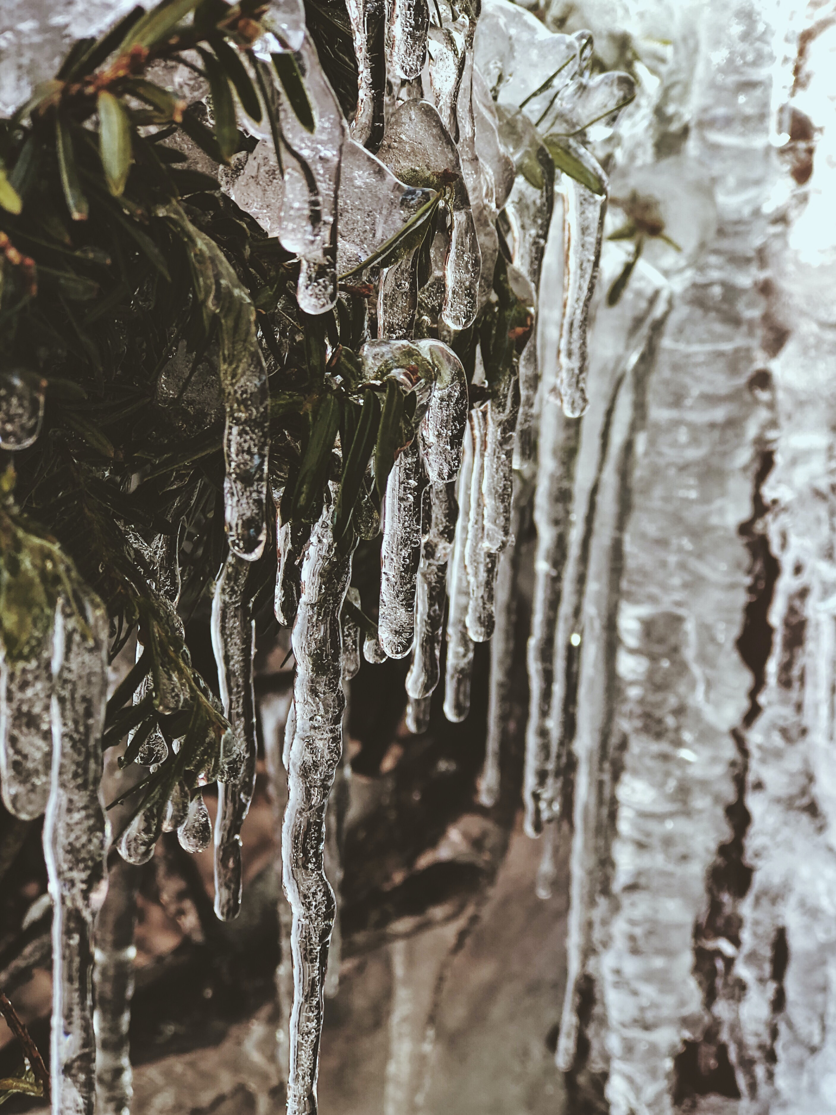 photo of icicle