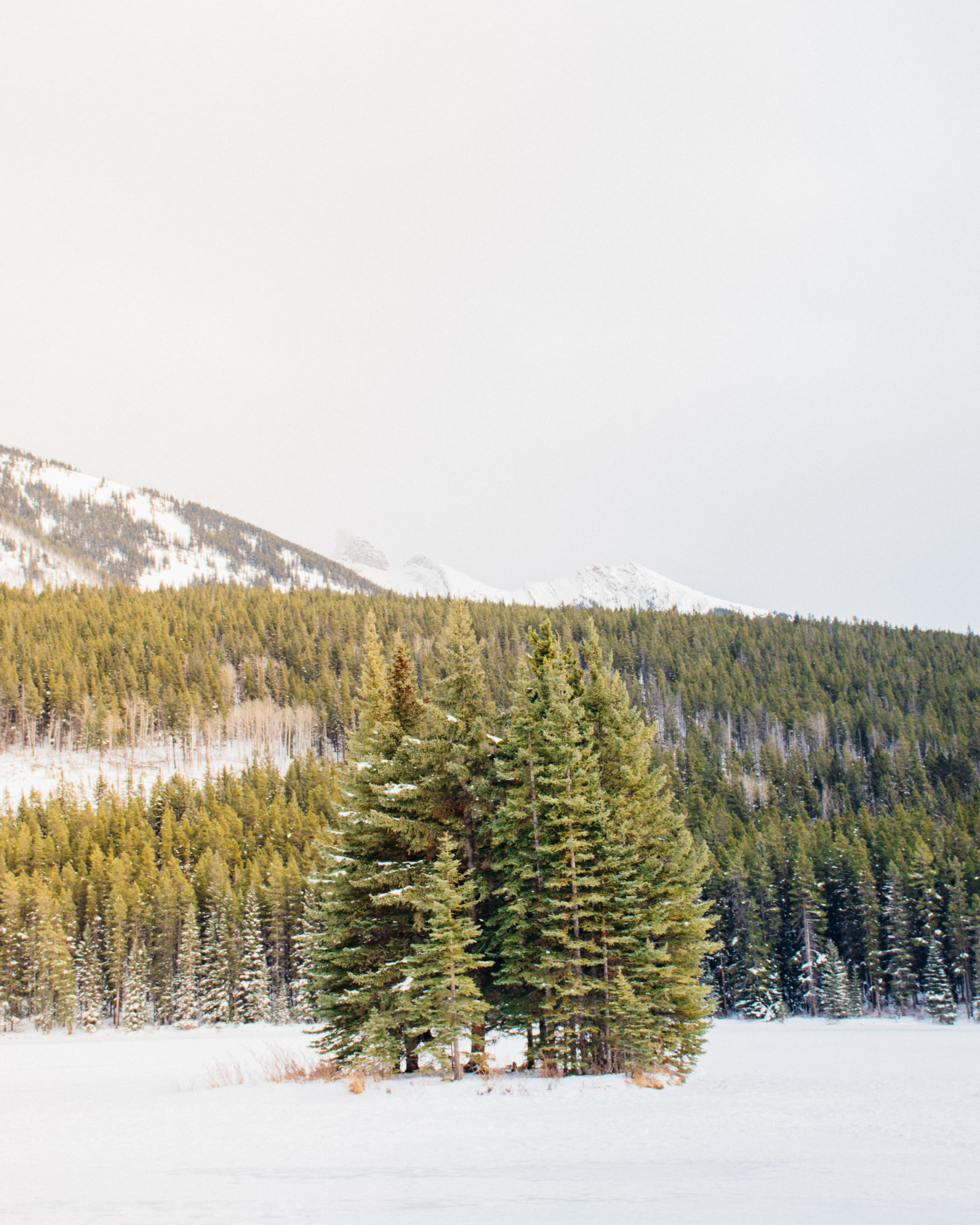 green pine trees surrounded with snow during daytime