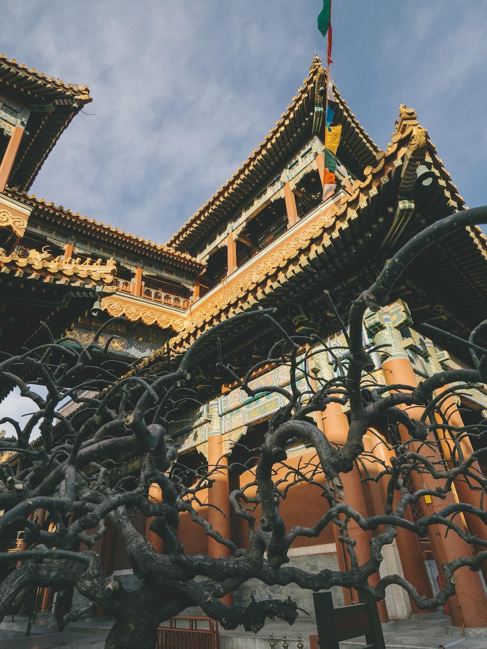 photo of Forbidden City, China