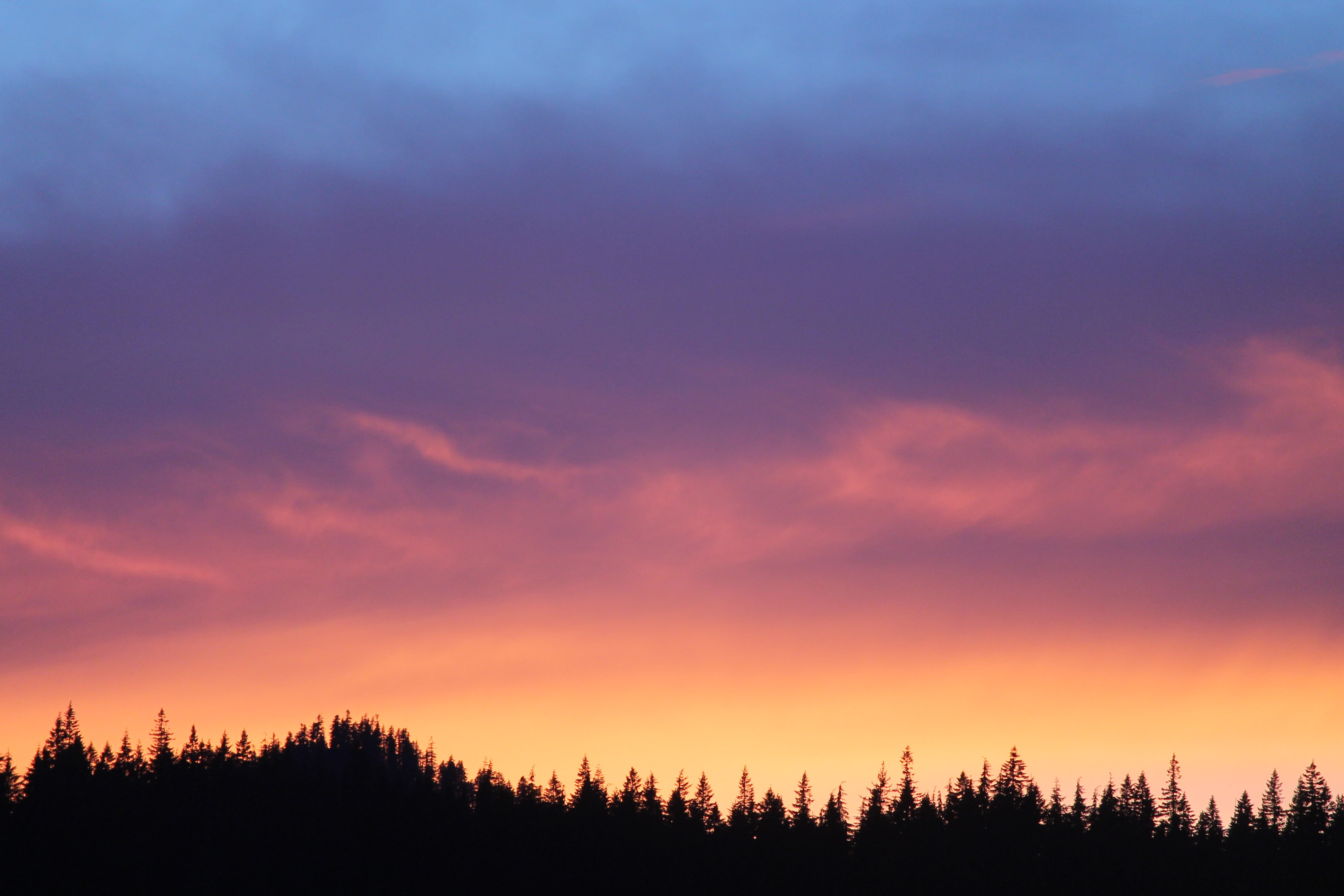silhouette of trees under orange and blue sky during sunset