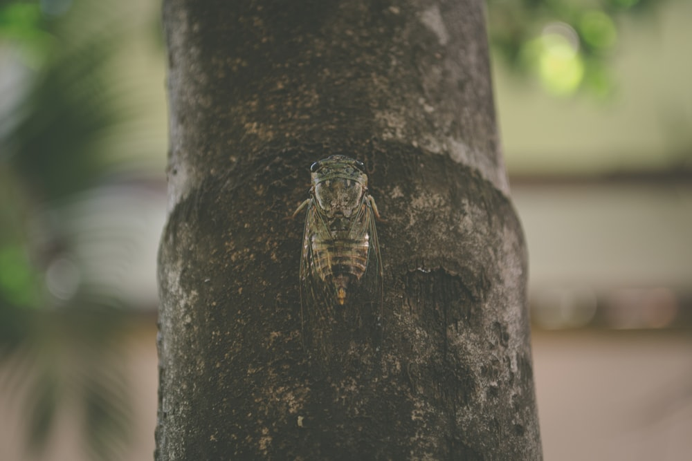 moth on bamboo