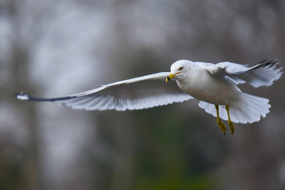selective focus photography of flying white bird