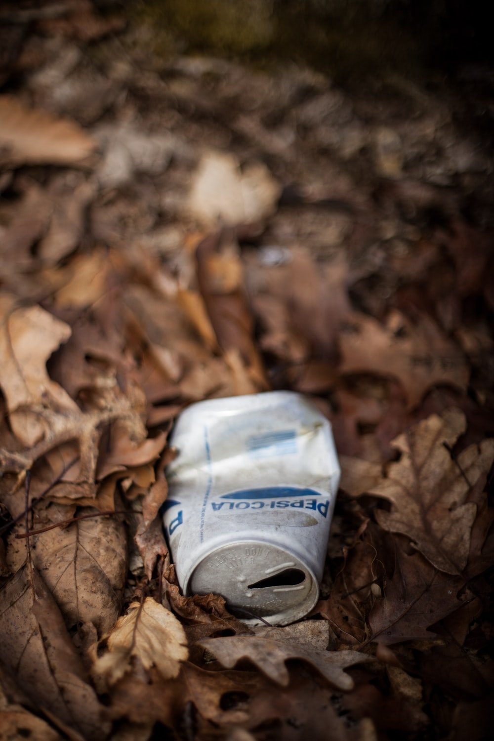 gray beverage can on dried leaves