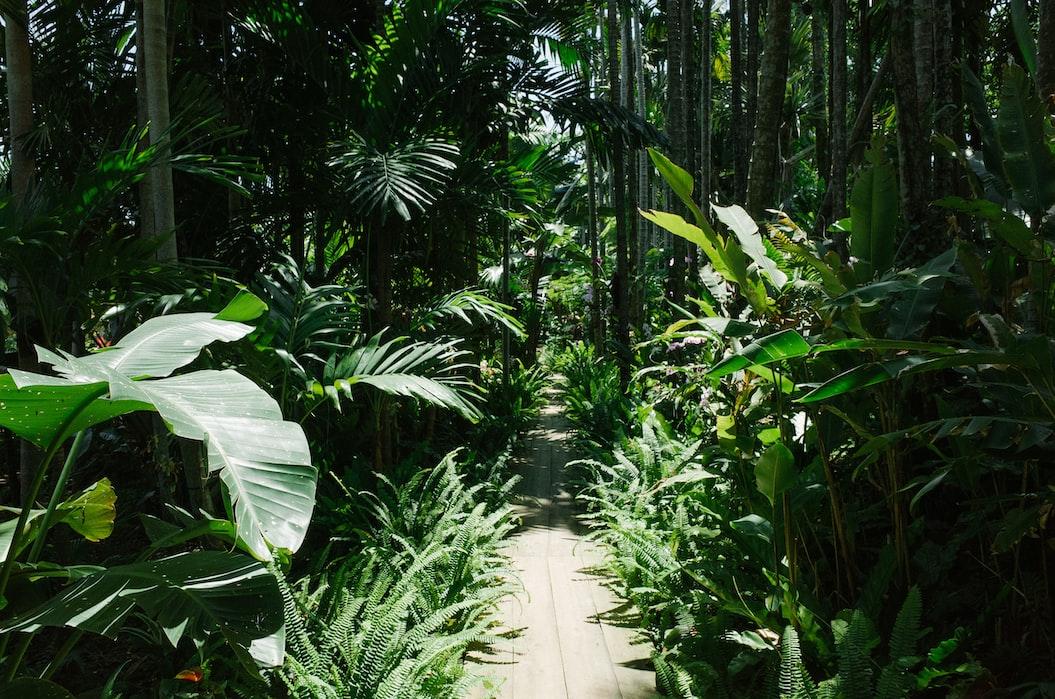 Lush garden walkway