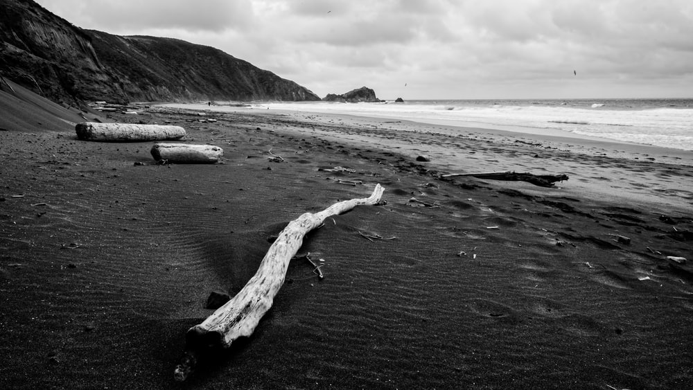 driftwood on seashore