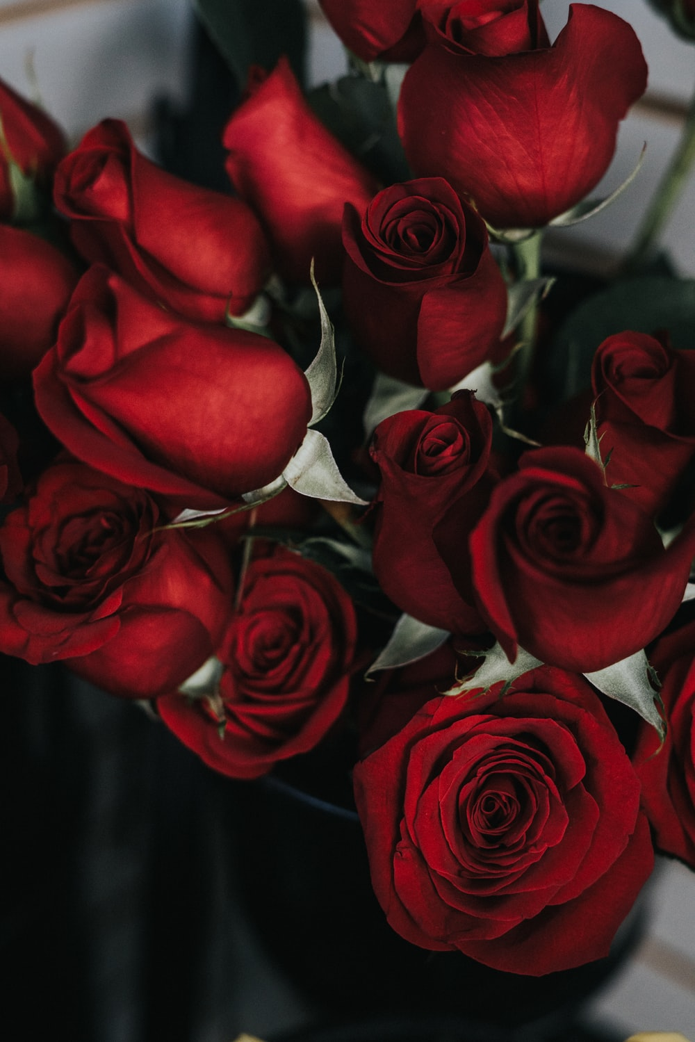 27 Roses Images Download Free Images On Unsplash
